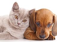 可爱猫咪狗狗动物壁纸精选图片