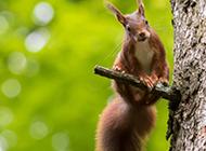 可爱的小松鼠高清摄影图片