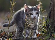超萌可爱小花猫动物壁纸