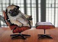 狗狗的高级待遇搞笑图片