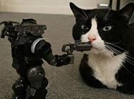 黑猫警长搞笑动物图片