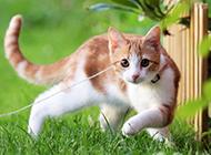 夏天绿草地可爱萌猫咪壁纸图片