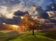 唯美大自然四季日出风景壁纸