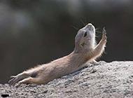小地鼠动物搞怪表情