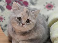 撒娇迷人的可爱猫咪图片