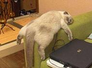 玩游戏的猫动物搞笑趣图