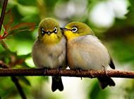 树枝上的两只小鸟高清图片