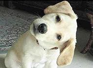 狗狗爆笑图之耳朵进水了