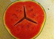 名牌的西瓜创意搞怪图片