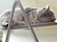 椅子上睡觉的猫咪意境图片