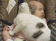 宝宝和猫一起睡觉的图片