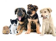 超萌小宠物可爱动物壁纸