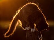 阳光下玩耍的猫摄影图片