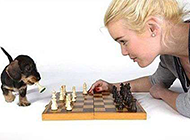 狗狗下象棋恶搞图片
