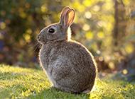 森林绿色草地小兔子壁纸图片