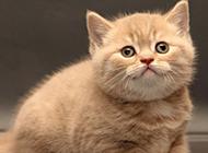 娇小软萌的可爱猫咪壁纸