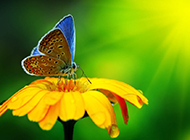美丽梦幻的蝴蝶ppt背景图片