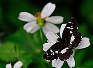 春天田野花卉蝴蝶风景电脑壁纸