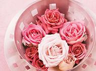 唯美的粉玫瑰鲜花背景图片