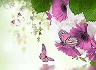 蝴蝶与花唯美意境ppt背景图片