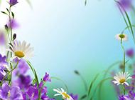 简单唯美的花卉背景图片