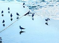 美丽大海蓝色小清新风景壁纸图片