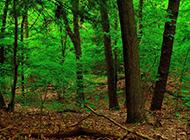 绿色森林高清护眼桌面壁纸