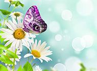 花朵上的蝴蝶唯美意境简约背景图片