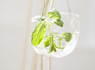 小清新治愈系绿色植物美图背景