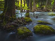 春天的绿色树木河流风景壁纸