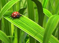最新绿色植物背景高清图