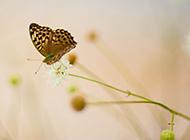 春日蝴蝶唯美花卉背景图片
