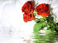 水中的玫瑰花ppt背景图片