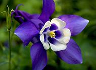 春天小清新七彩植物花卉壁纸