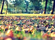 浪漫唯美秋天森林草地意境图片