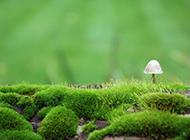 珍贵的野生菌绿色护眼高清壁纸