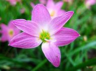 粉红色春天野花摄影图片