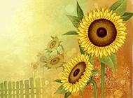 唯美灿烂向日葵背景素材