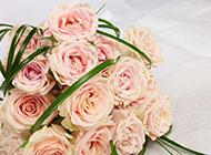 浪漫粉玫瑰花束图片素材