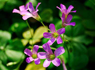 大自然清新小野花摄影图