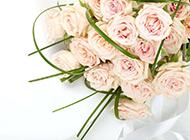 唯美高清粉玫瑰花束图片