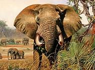非洲豹图片 非洲大象图片