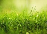 一片绿草地绿色风景桌面壁纸
