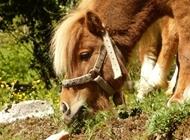 可爱母狮子图片大全 可爱的小马动物图片大全