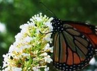可爱母狮子图片大全可爱 可爱的蝴蝶壁图片大全