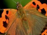 最美丽的孔雀图片大全 美丽蝴蝶图片高清大全