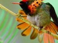 美丽的紫孔雀图片大全 美丽的鸟儿图片大全