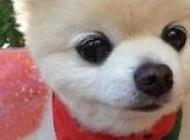 宠物猫猫图片大全 精选可爱的小型宠物狗图片大全