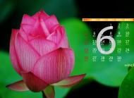 2016年6月日历莲花绿叶桌面壁纸