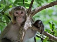 张家界的猴子们